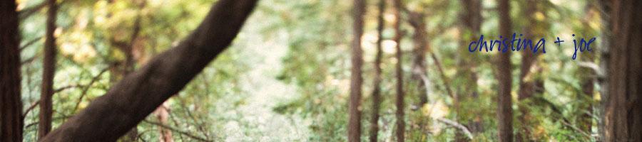 Redwood-Forest-Wedding-Retreat .jpg