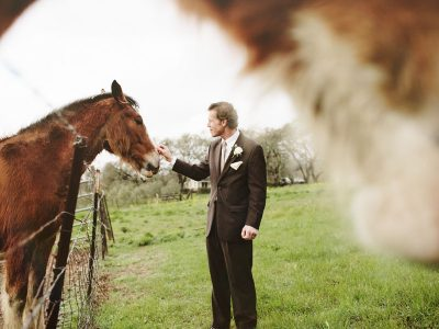 horses at wedding