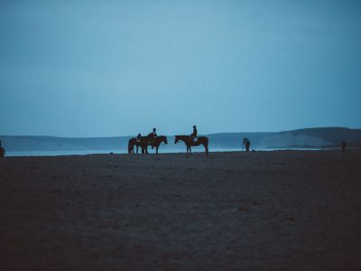 horses in Point Reyes