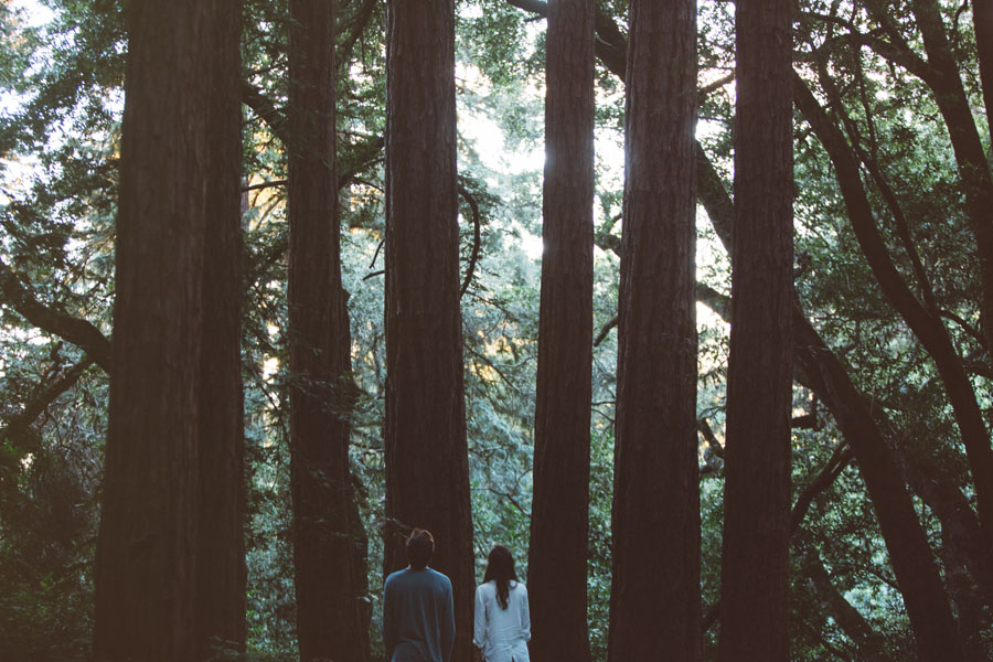 Engagement session in the Redwoods and Los Altos wedding.
